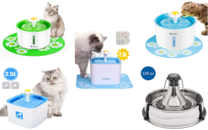 Choosing the Best Water Drinking Fountain for Multiple Cats